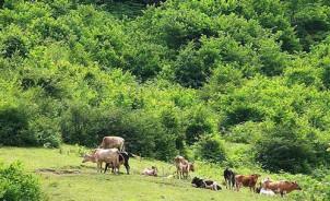 """""""Die Verantwortlichen erlauben, dass Bäume abgeholzt und dafür Weideflächen geschaffen werden"""""""