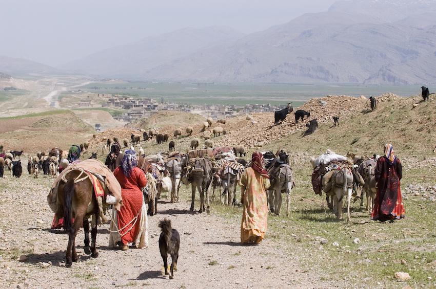 Mitte Juni beginnt die traditionelle Sommerwanderung der iranischen Nomaden von den südlichen Provinzen in die gemäßigteren Klimazonen im Westen und Nordwesten des Landes. Im Iran leben mehrere Nomadenstämme, die nur zum Teil sesshaft geworden sind. Die Bachtiari, zum Beispiel, sind ein Stamm von etwa 600.000 Menschen. Mehr als ein Drittel von ihnen lebt noch als Wanderhirten. Die Sommerwanderung der Bachtiaris von der südlichen Provinz Khusestan in die westlichen Provinz Tschahar-Mahalo-Bachtiari führt über asphaltiere Straßen und Berge auf bis zu 3.000 Meter Höhe und dauert zwischen sechs und acht Wochen.