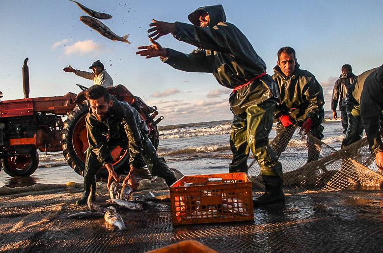Jedes Jahr fahren die Fischer im Norden des Iran von Oktober bis März auf das Kaspische Meer, um dort vor allem Knochenfische und Meeräschen zu fangen. Viele Anwohner der Region verdienen ihren Lebensunterhalt mit der Fischerei. In diesem Jahr wurden von Oktober bis Anfang Januar nur 615 Tonnen Fische gefangen. Das sind 46 Prozent weniger als in der gleichen Zeit im Vorjahr. (fh)
