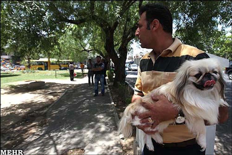 """Nach den islamischen Geboten gilt der Hund als unreines Tier und darf nicht mit Menschen unter einem Dach leben. Hundehaltung ist nur für die Jagd und die Schafzucht gestattet. Trotzdem ist im Iran die Zahl der HundehalterInnen in den letzten Jahren enorm gestiegen, was der islamischen Regierung ernsthafte Probleme bereitet. Einerseits ist es ihre Aufgabe, islamische Werte zu fördern, andererseits kann sie gesellschaftliche Entwicklungen nicht ignorieren. Also haben die verantwortlichen Behörden Jahrzehnte lang jede Art von Werbung für den Verkauf von Haushunden verboten. Nun werden seit über einem Jahr Webseiten, die sich auf den Gebieten Hundehaltung und –verkauf spezialisiert haben, toleriert – und ihre Zahl nimmt rasant zu. Gibt man bei Google auf Persisch """"Verkauf von Haushunden"""" ein, erscheinen 26.000 Einträge."""