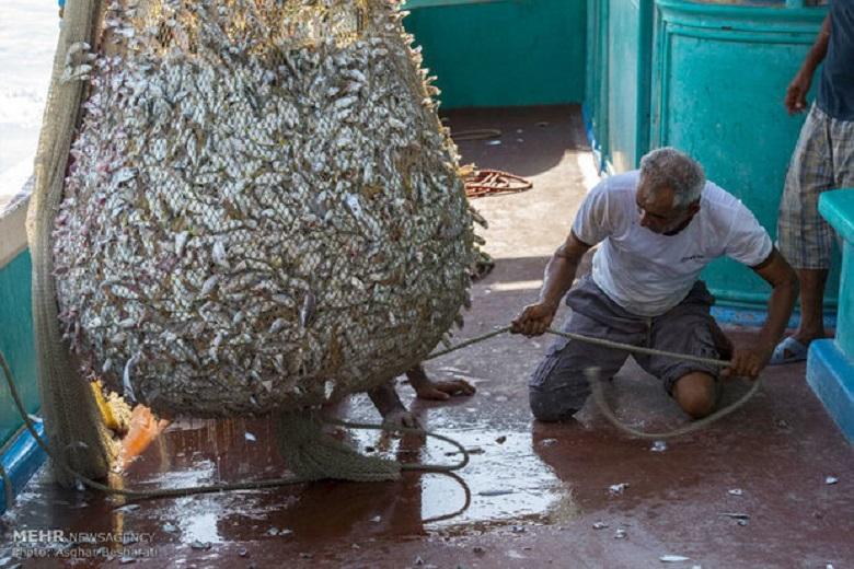 Iranische Garnelen werden in mehr als 20 Länder exportiert