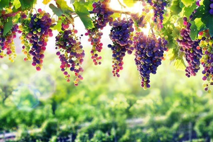 Mit einem Teil des Geldes für den nie angekommenen Bohrturm wurden Weingüter in den USA gekauft - Foto: bamilo.com