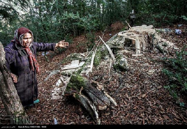 Mit offizieller Erlaubnis der Forstbehörden sind in der Ortschaft Patschat (oder Pajat) in der nordiranischen Provinz Mazandaran zahlreiche alte Bäume abgeholzt worden. Nach Angaben iranischer Nachrichtenseiten waren die seltenen Bäume bis zu 1.000 Jahre alt. Um welche Baumart es sich handelt, ist nicht bekannt gegeben worden. Allerdings genießen in der Region Samt-Ahorn-Bäume besonderer Beliebtheit. Patschat gehört mit einer fast mediterran anmutenden Landschaft zu den schönsten Gebieten der grünen Provinz.