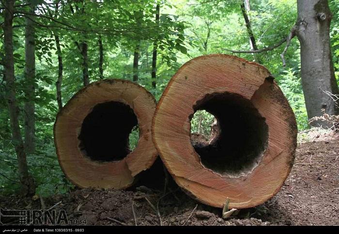 Jedes Jahr wird es staatlichen und privaten Firmen gestattet, im Mazandaran-Wald Bäume abholzen. Im Frühling und Herbst darf eine Fläche bis zu 70 Hektar geschlagen werden. Dieser Wald in der nördlichen Provinz Mazandaran gehört mit etwa 1 Million Hektar Fläche zu den üppigsten und wertvollsten Waldbeständen des Iran. Dort wachsen unter anderem Wahlnuss-, Edelkastanien- und Granatapfelbäume.