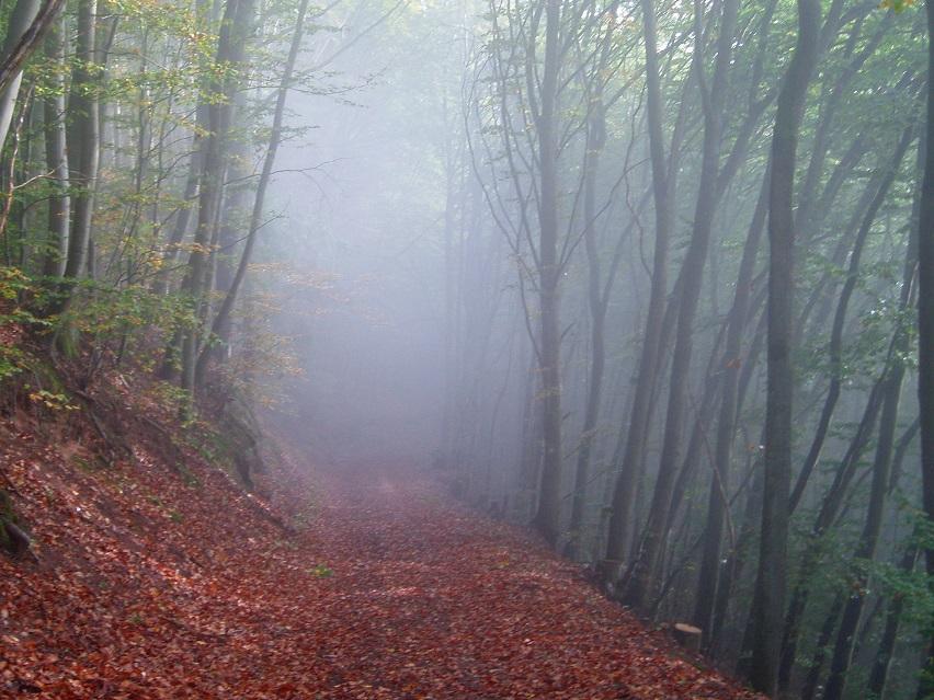 """Der """"Wolkenwald"""" im Norden Irans trägt seinen Namen, weil dieses Waldstück meist von Wolken durchzogen ist, die sich in den Baumwipfeln verfangen. Der Wolkenwald ist unter anderem wegen seiner einzigartigen Flora in die Liste des iranischen Kulturerbes aufgenommen worden und ist ein beliebtes Ausflugsziel. Trotzdem soll er zum Teil einer Schnellstraße zum Opfer fallen. Das staatliche Umweltamt und verschiedene NGOs protestieren seit Jahren gegen den Plan, der in der Zeit der Präsidentschaft von Mahmoud Ahmadinedschad bewilligt worden aber wegen des Widerstandes der Verantwortlichen der Umweltbehörde nicht realisiert worden war. Die treibende Kraft hinter dem Straßenbauvorhaben ist zurzeit der Parlamentarier Rahmatolllah Nouroozi und einige - der Öffentlichkeit unbekannten - Investoren. Nouroozis Meinung nach, würde diese Straße zu der Entwicklung und dem """"Fortschritt"""" seines Wahlbezirks Ali Abad in der Nähe der Stadt Shahrood beitragen. Deshalb hat er vor kurzem erneut bei den Hardlinern im Parlament für den Bau der Schnellstraße geworben. Die UmweltschützerInnen befürchten, dass Nouroozi durch seine Beziehungen zu Wirtschaftsfunktionären irgendwann seinen Plan umsetzen und somit ein weiteres Kulturerbe des Iran gefährden könnte."""