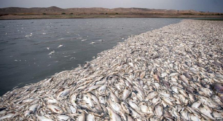 Nachdem im Frühjahr dieses Jahres aufgrund von starken Regenfällen die Wassermengen und Fischbestände des Hirmand angestiegen waren, so wirkt sich jetzt die Sommerhitze auf den Fluss in der iranischen Provinz Sistan und Belutschestan aus. Nach Angaben der regionalen Umweltbehörde verdampft durch die Hitze das Wasser so sehr, dass bereits mehrere Millionen Fische verendet seien. Ein Ende dieses Fischsterbens sei nicht in Sicht.