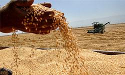 """FAO: """"Der Iran wird im laufenden Jahr 8,2 Millionen Tonnen weniger Getreide produzieren""""."""