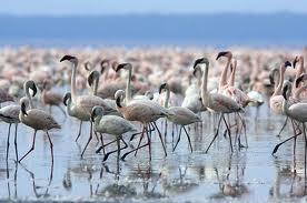 Miankaleh ist die Heimat von jährlich fast einer Million unterschiedlicher Zugvögel aus aller Welt ist. Foto: www.arw.ir.
