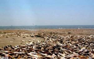 Experten warnen: Die Verschmutzung des Kaspischen Meeres ist besorgniserregend!