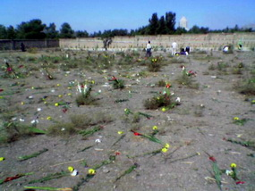 1988 wurden mehrere Tausend politische in Eilverfahren zum Tode verurteilt und hingerichtet. Foto: Ein Massengrab der Hingerichteten in Khavaran, Teheran.