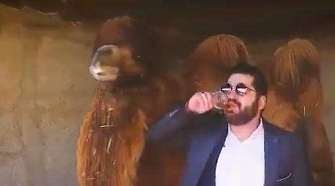 Kamelurin gegen Corona, Covid, Islamische Medizin?