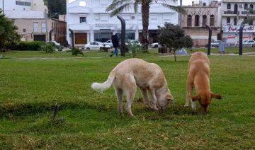 Hunde im Iran, Streunerhunde im Iran, Schahinschahr, Hundehaltung, Hunde im Islam, Töten von Hunden